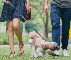 Busy? Here is how to sneak more exercise into your day